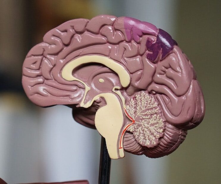 Hjernerystelse psykolog københavn